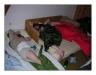 2006_Travnicek_09